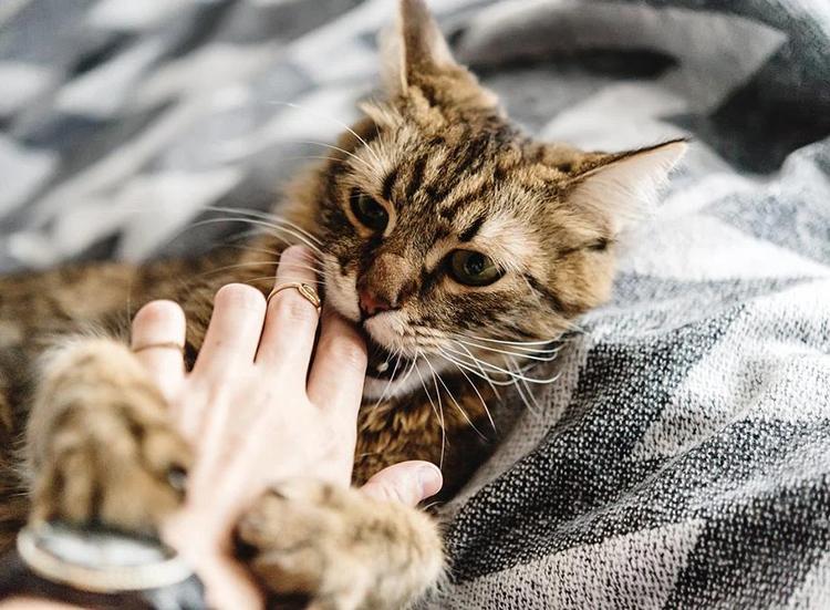 Mơ thấy mèo cắn