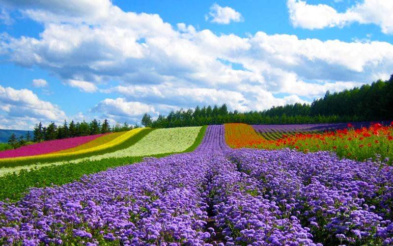 Mơ thấy vườn hoa là điềm báo gì? May mắn hay vận xui?